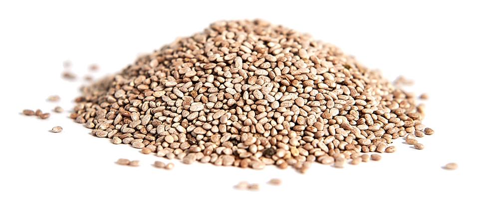 seeds-b-02